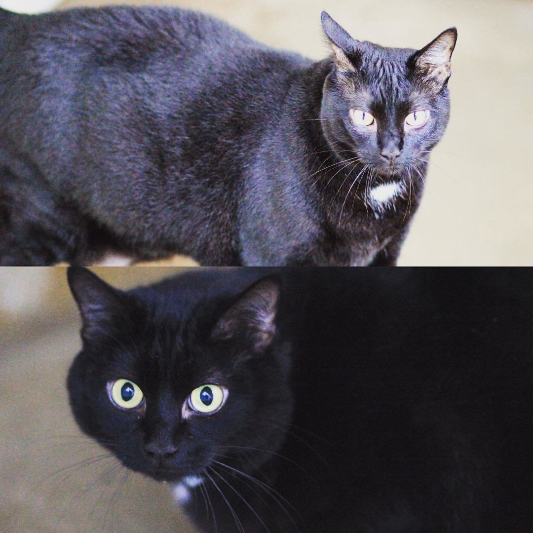 Annabel and Lilly two cats up for adoption at Worcester County