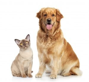 cat and dog_98962007