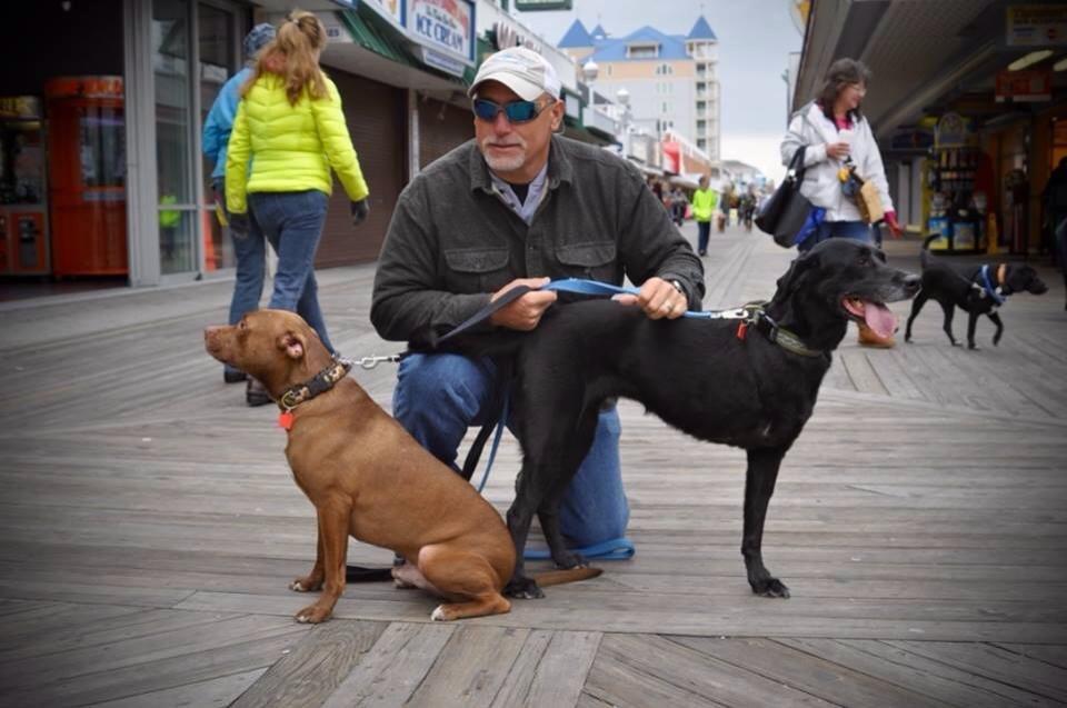 Watch A Dog S Purpose No Registration