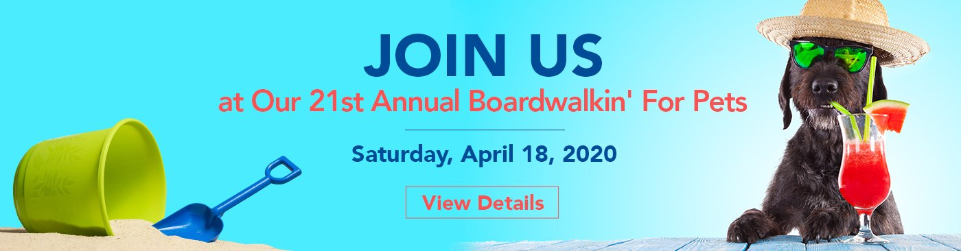 dog with hat and sunglasses with sand bucket and shovel for boardwalkin' for pets event save the date april 18, 2020