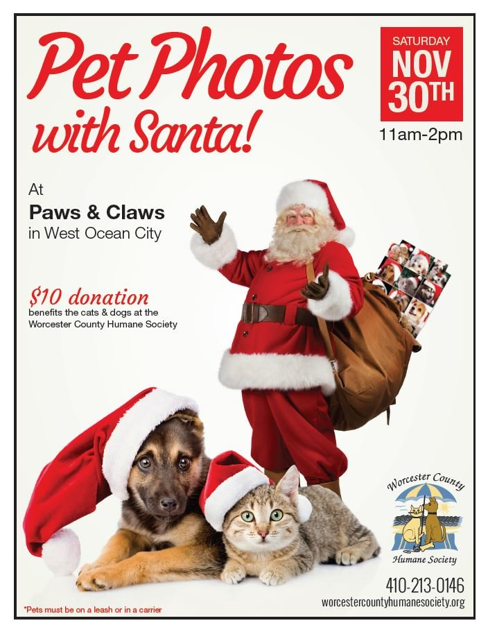 cat and dogs with santa for photos to raise money for humane society
