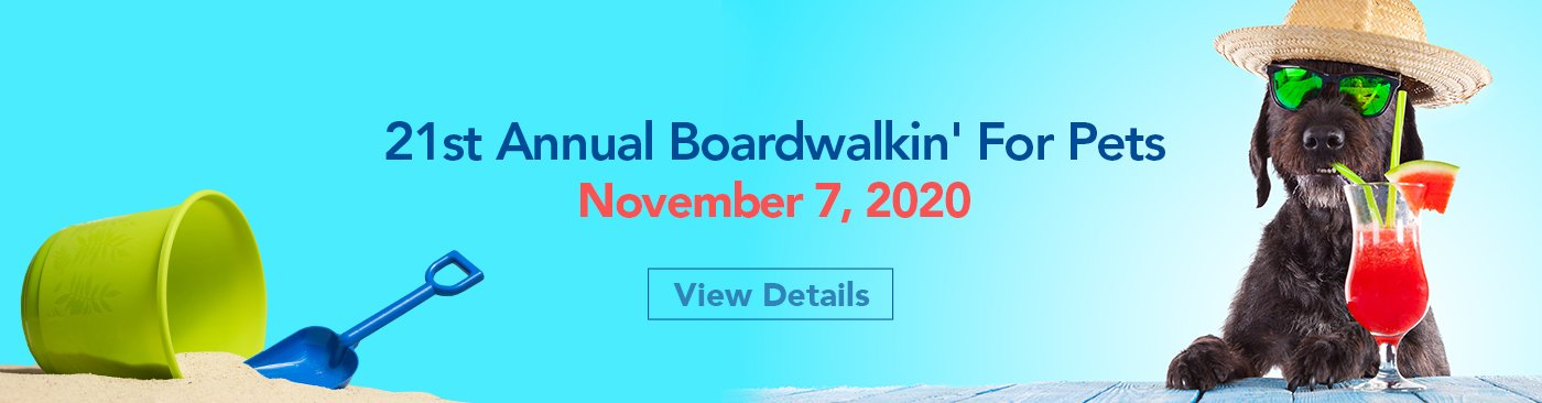 boardwalkin for pets event by worcester county humane society november 7 2020